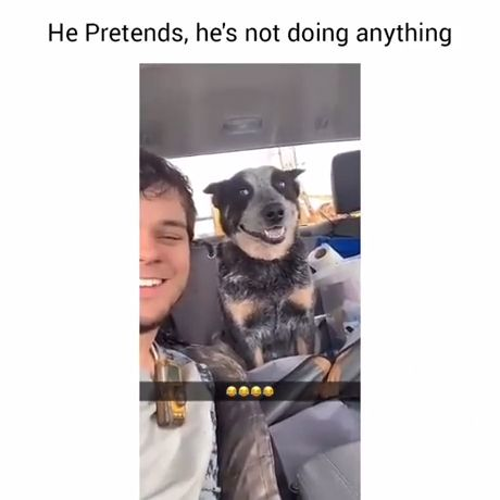 He Acts Like He Doesn't Care But He Does - Funny Videos - funvizeo.com - funny dog videos,funny,funny video meme