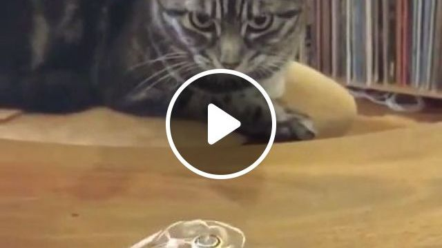 What Sorcery Is This Meme - Video & GIFs | what is this sorcery, funny, magic