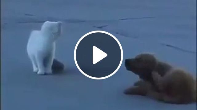 Mission Impossible: Spy Puppy - Funny Videos - funvizeo.com - mission impossible,funny puppy videos,spy,pet
