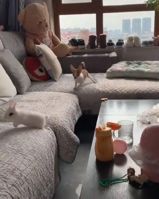 Catch Me If You Can - Funny Videos - funvizeo.com - funny,funny animal videos,rabbit,doggo