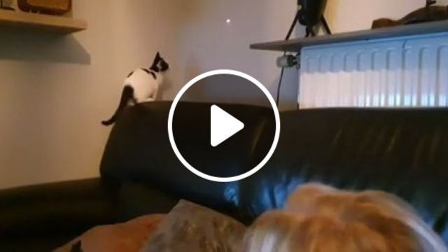 Teasing Cat With Laser - Video & GIFs   funny fails, funny cat videos, pet