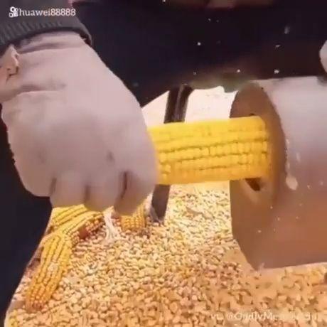 Sweet Corn Separator Machine - Funny Videos - funvizeo.com - satisfying,corn,machine,funny