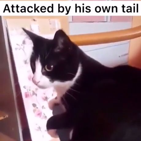 Really Funny Cat Memes