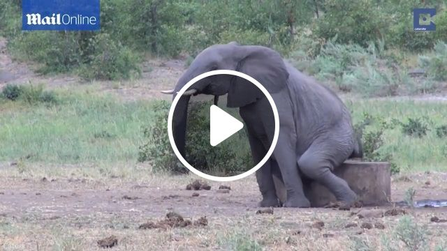 Elephant Scratching The Itch, elephant, wild animal, scratching, funny animal, nature, root, tree
