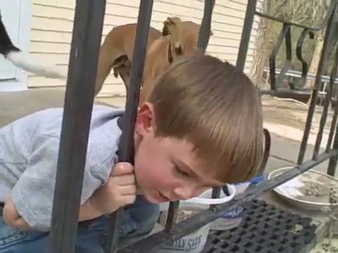 How to get his head out of iron fence? - Funny Videos - funvizeo.com - kid, funny, iron fence, head