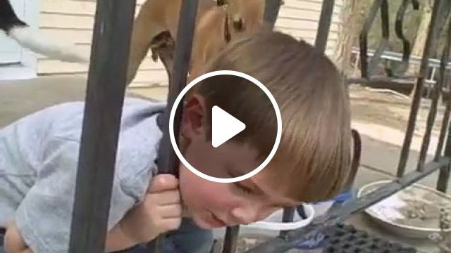 How to get his head out of iron fence?, kid, funny, iron fence, head