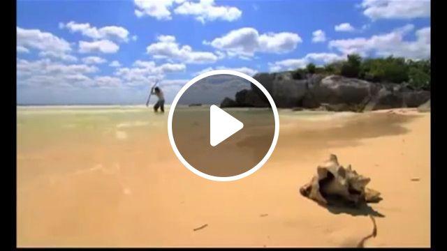 Robinson on a deserted island, lol, robinson, island, funny, fish, bird, sea, beach, fishing