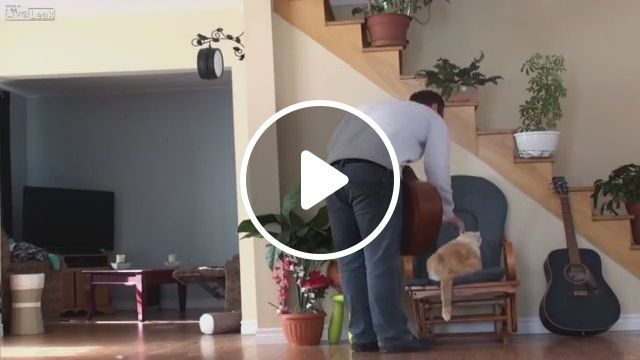 Revenge of cat, cat, sleep, smart cat, pet, guitar, flower pot, revenge, stairs