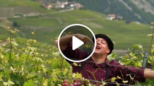 Yeahh, he finally succeeded - Funny Videos - funvizeo.com - grape, humor, success