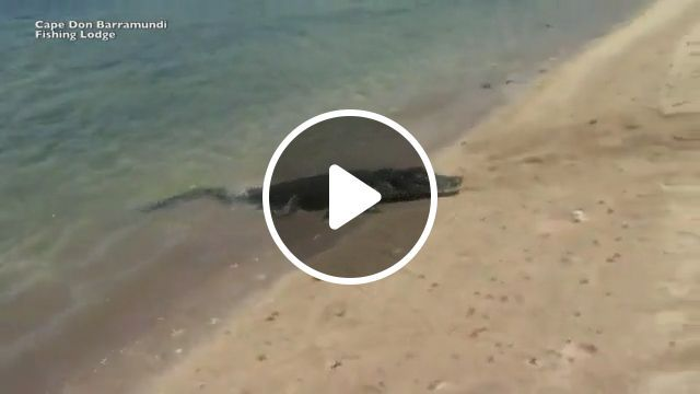 Touching story, crocodile ashore to rescue the shark, lol