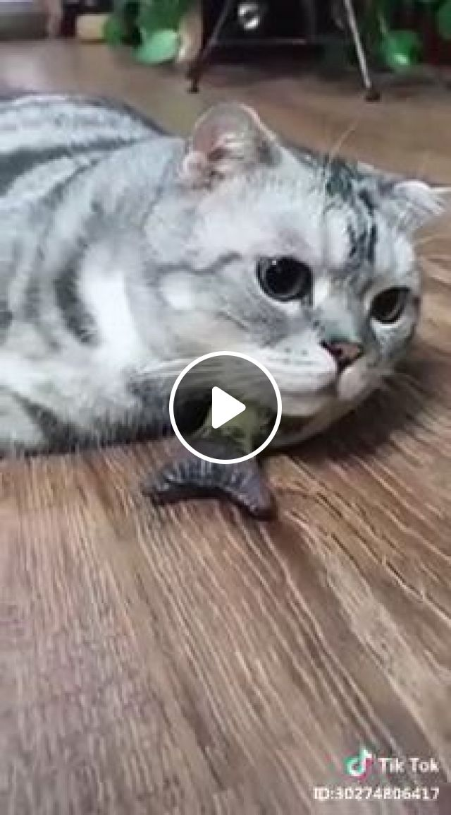 Hey little mouse, thank you!, cat, mouse, run, pet