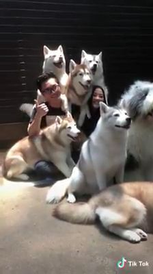 Take cute photos with lovely dogs