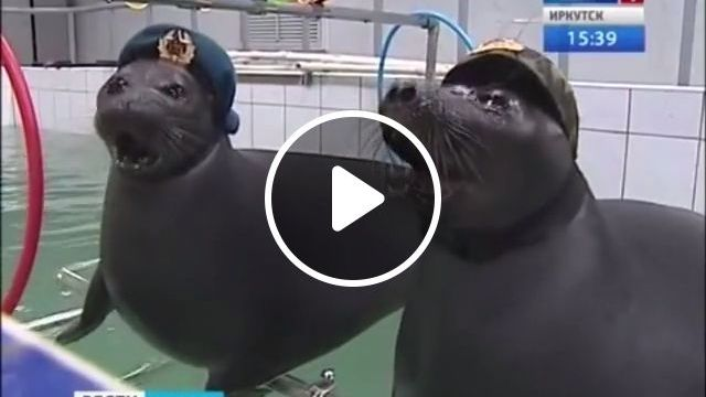 In the army now - Funny Videos - funvizeo.com - water seal, army, animal