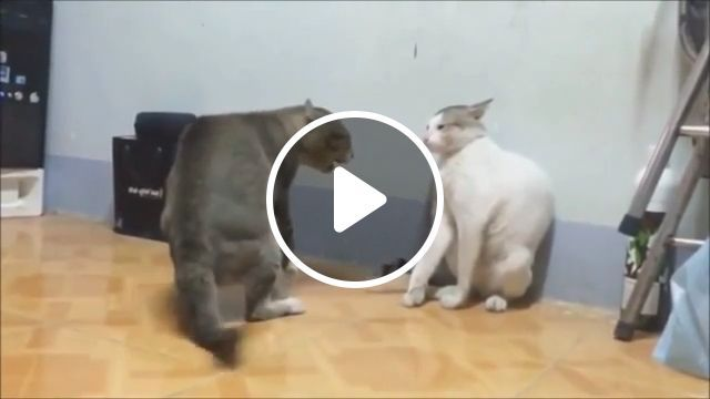 Super Punches - Funny Videos - funvizeo.com - cat, boxing, pet, fight