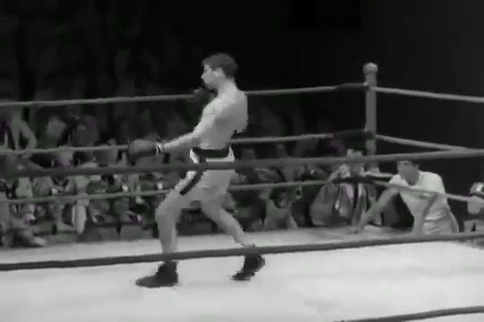 The Funniest Boxer Ever