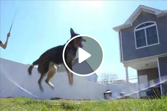 The master jumps rope in the neighborhood, dog, smart, pet, jump