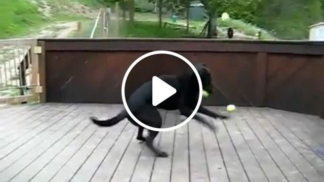 Surprise, dog, pet, tennis, ball