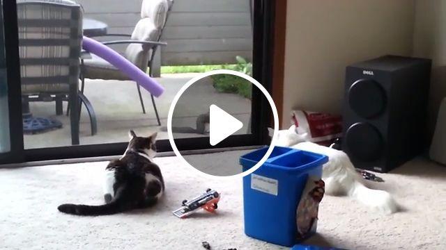 Destructive Cats, cat, pet, squirrel, animal, destructive