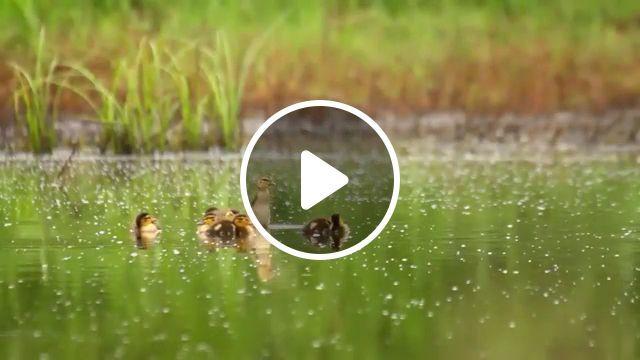 Duck Rescue, duck, rescue, kindness, cute animal, police