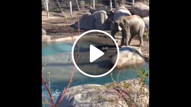 Little goose vs elephant, elephants, goose, animal, fight