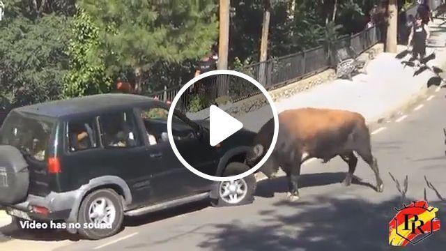 Car vs Bull