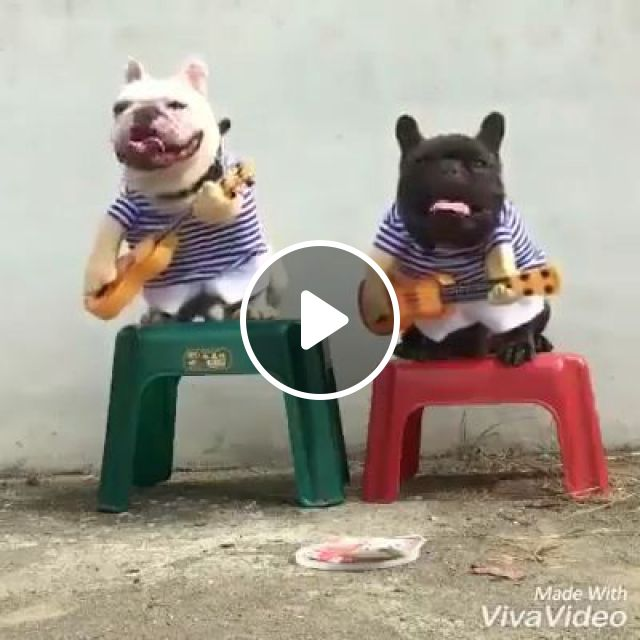 Street artists are in need of money to buy cake, lol, dog, boss, guitar, performances, pet