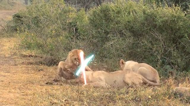 Star wars: Great lion war