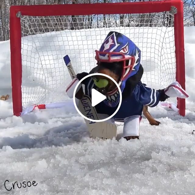 Excellent player hockey, hockey, dog, snow, pet, cute