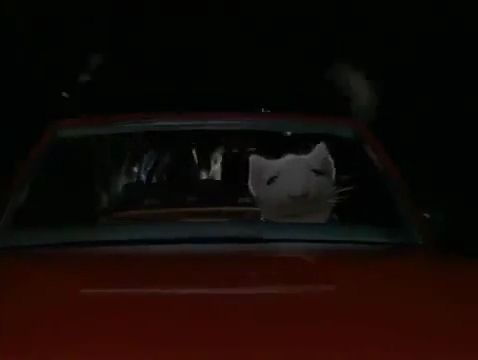 Mouse Escapes Cat - Funny Videos - funvizeo.com - funny pet, toy car, funny mouse