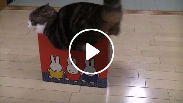 Favorite place to sleep, cat, box, sleep, pet, cute