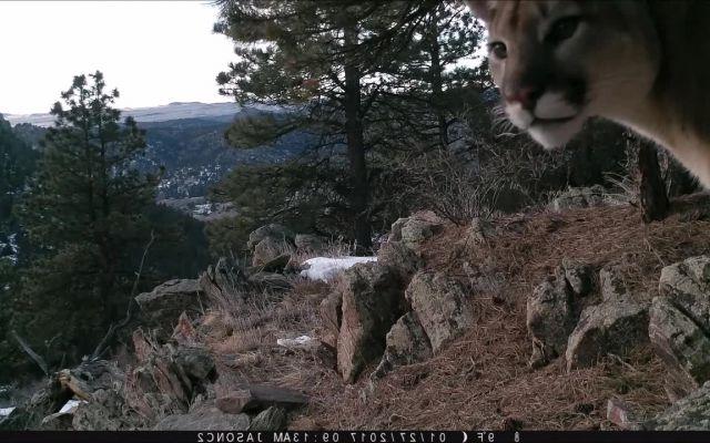 Lion Police memes - Video & GIFs | Wow memes,kek memes,lol memes,2017 memes,comedy memes,funny memes,animal memes,wow lion memes,wow tiger memes,tiger memes,lion memes,movie memes,code 8 memes,krs one sound of da police memes