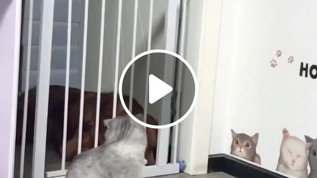 Magician, cat, dog, pet, door, magic