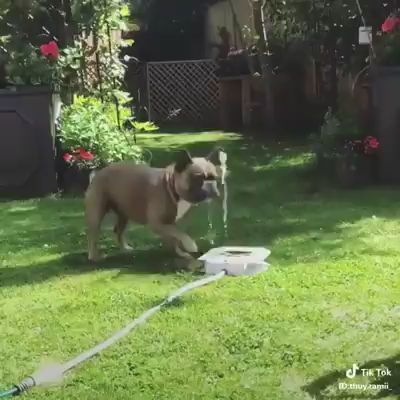 When a skillful dog drinking water
