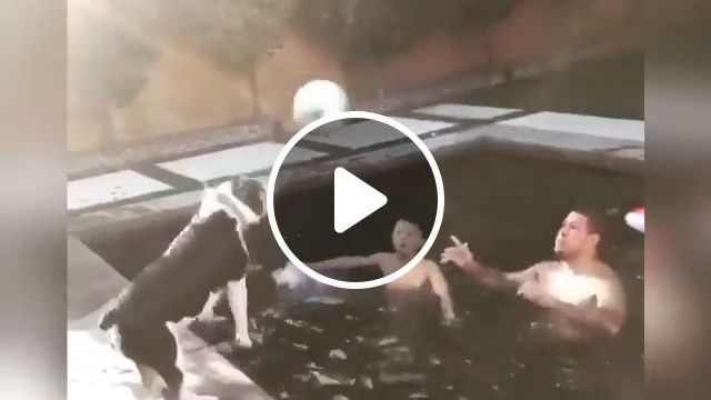 Guess who will be the winner - Funny Videos - funvizeo.com - dog, boss, pet, humor
