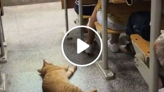 Classroom is where we sleep very well - Funny Videos - funvizeo.com - cat, pet, classroom, sleep