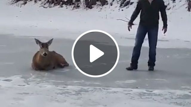 Good Hearted Men - Funny Videos - funvizeo.com - kind,men,deer,animal,frozen,lake