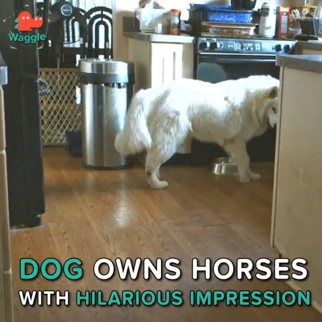 Dog owns horses with hilarious impression