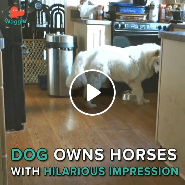 Dog Owns Horses With Hilarious Impression - Video & GIFs   dog, horse, pet, hilarious