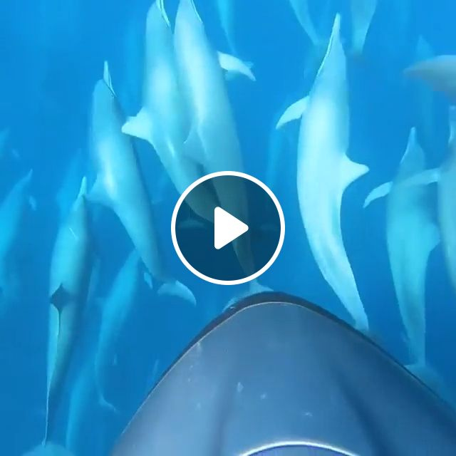 Dive With Dolphins - Video & GIFs | dolphin, ocean, nature, animal
