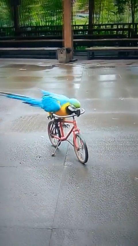 I like to ride a bike than fly