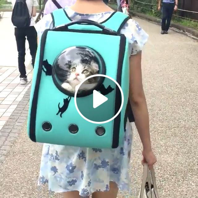 Hello Earth, I Came Here, Hihi - Video & GIFs   pet, cat, adorable