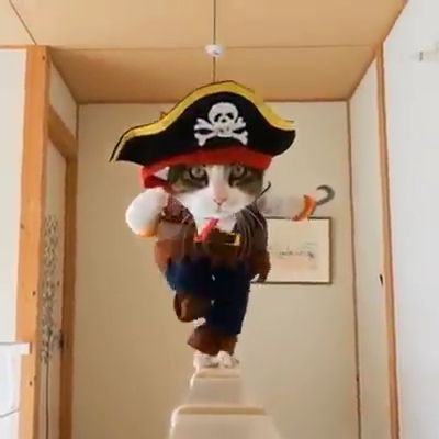 Pirates of the Caribbean - Funny Videos - funvizeo.com - cat,pet,adorable,pirate