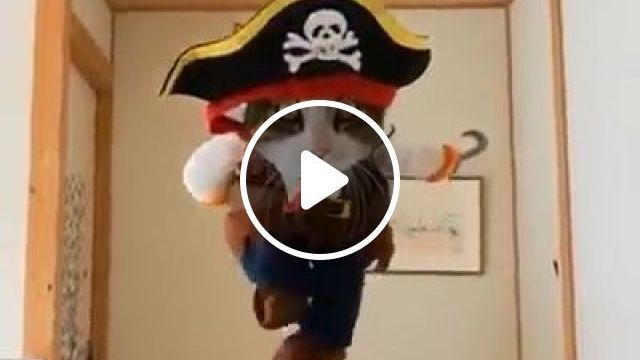 Pirates of the Caribbean - Funny Videos - funvizeo.com - cat,pet,adorable,pirate