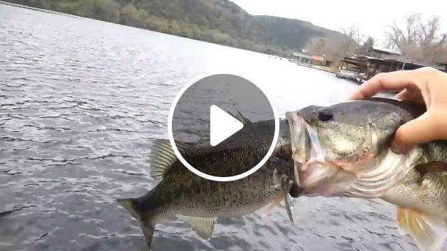 The Greedy Fish