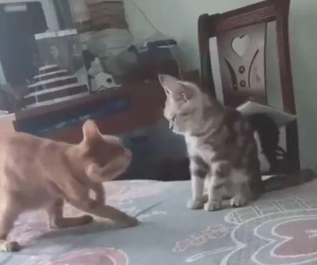 I just want to hug you - Funny Videos - funvizeo.com - kitty,pet,adorable,hug