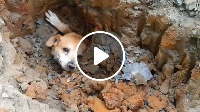 Rescue the dog trapped in the ground
