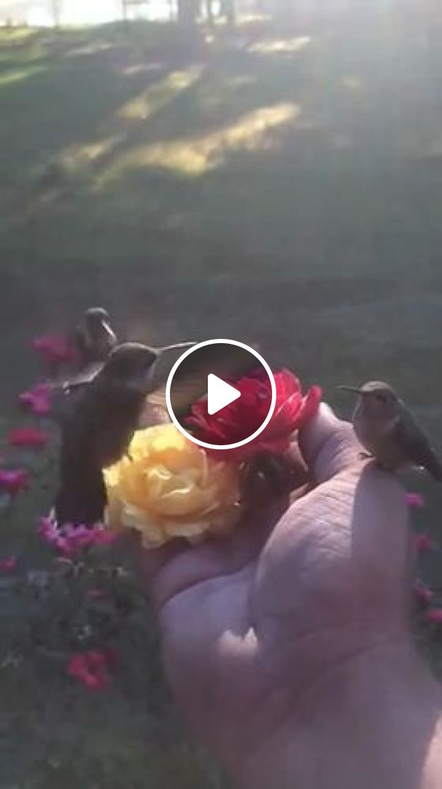 Beautiful Nature - Video & GIFs | bird, animal, nature, flower