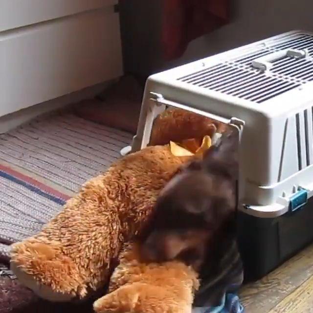 Hold teddy bear for a good night's sleep