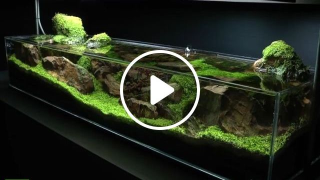 Creating a beautiful breathtaking aquascape