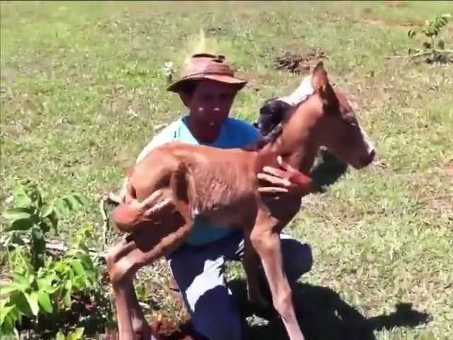 Missing Baby Horse - Funny Videos - funvizeo.com - horse,missing,baby,animal